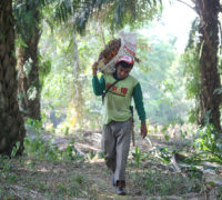 A palm worker, for sustainable Palm.